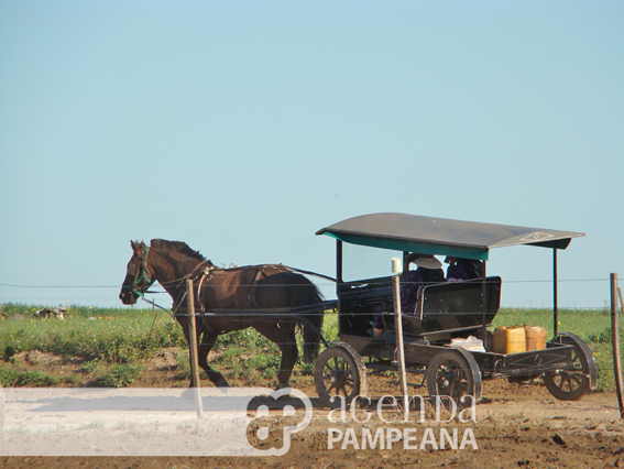 Colonia_Menonita_Nueva_Esperanza_Guatrache (6)