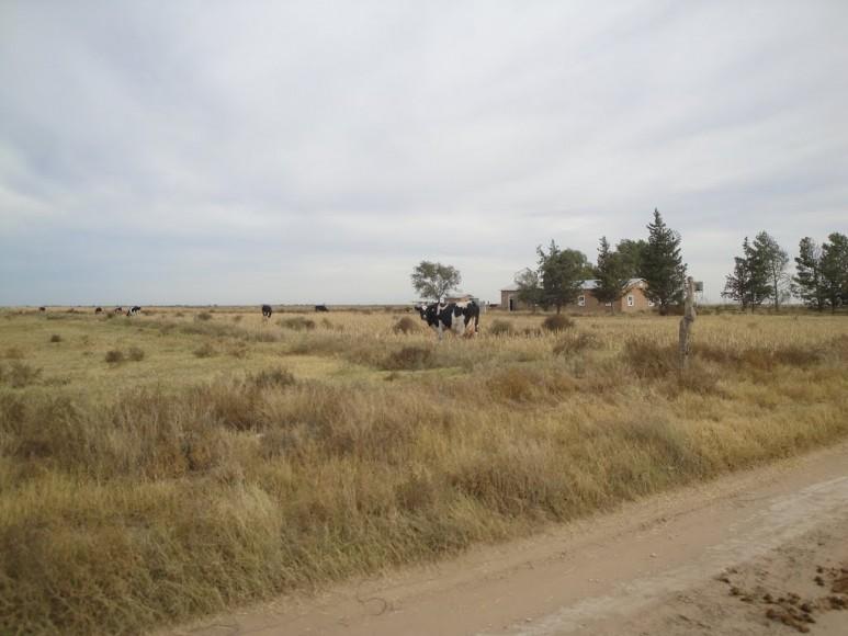 Colonia_Menonita_Nueva_Esperanza_Guatrache (9)